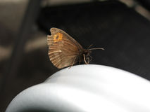 A butterfly taking a rest Stock Images