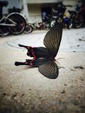 Butterfly. There was a dead beautiful butterfly Royalty Free Stock Images