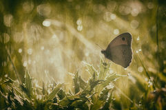 Butterfly on a thorn Royalty Free Stock Photo