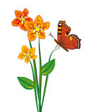 Butterfly and three red flower Stock Image