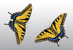 Butterfly  Tiger Swallowtail Stock Images