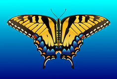 Butterfly  Tiger Swallowtail Royalty Free Stock Images