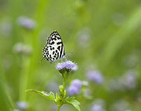 Butterfly to nature. Beautifu color flower green  nature natural  white  black  wildlife Royalty Free Stock Image