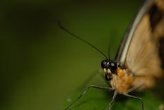 Butterfly today Royalty Free Stock Photography