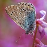 Butterfly on top Royalty Free Stock Photo
