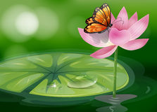 A butterfly at the top of a pink flower Stock Photos
