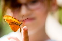 Butterfly touch. Ing with finger Royalty Free Stock Image