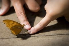 Butterfly touch. Ing with finger Stock Photo