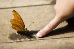 Butterfly touch Stock Images