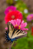 Butterfly on a trail of flowers stock photos