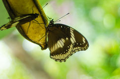Butterfly in train  park  thailand. Butterfly in train graden park thailand Stock Photography