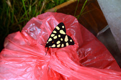 Butterfly on the trash Royalty Free Stock Photo