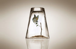 Butterfly and tree. In the glass Stock Photos