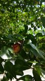 Butterfly on the tree Stock Photos