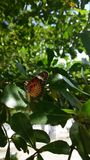 Butterfly on the tree Stock Photography