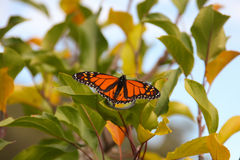 Butterfly on a tree Stock Images