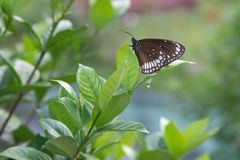 Butterfly on a tree branch royalty free stock photo