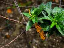 Butterfly on tree. In forest Stock Image