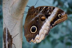 Butterfly on tree. Royalty Free Stock Photos