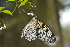 Butterfly. On a tree leaves Royalty Free Stock Image