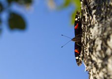 Butterfly. On a tree rind stock photos