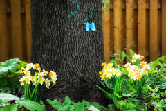 Butterfly on a Tree in a Spring Garden Royalty Free Stock Photos
