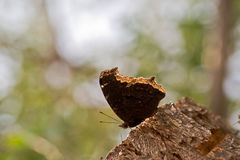 Butterfly on tree stump Stock Image