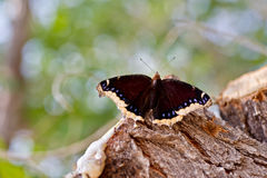Butterfly on tree stump Stock Photos