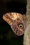 Butterfly on a tree trunk Royalty Free Stock Image