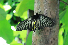 Butterfly trees insects gardens nature Stock Image