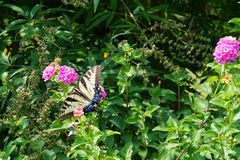Butterfly trimmed in blue Royalty Free Stock Images