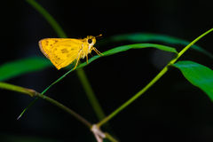 Butterfly tropical forest. Royalty Free Stock Images