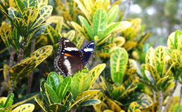 Butterfly in a tropical garden Royalty Free Stock Photo