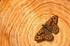 Butterfly on trunk. Brown butterfly sitting on trunk Stock Photography