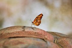 Butterfly on Turtle Shell Stock Photo