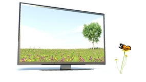 Butterfly and TV, nature Stock Images