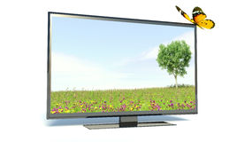 Butterfly on a TV, nature Royalty Free Stock Images
