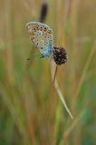 Butterfly on a twig. Royalty Free Stock Photo