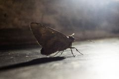 Butterfly under the beam of incident light stock photos