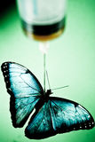 Butterfly under needle. Butterfly under the needle of a syringe Royalty Free Stock Photos