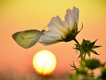 Butterfly  under the sunset Royalty Free Stock Images