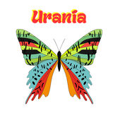 Butterfly urania vector illustration Stock Photo