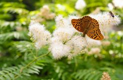 Butterfly urticaria sits on a flower. Summer background. Butterfly urticaria sits on a flower stock photo