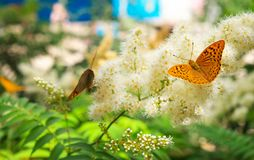 Butterfly urticaria sits on a flower. Summer background. Butterfly urticaria sits on a flower royalty free stock images
