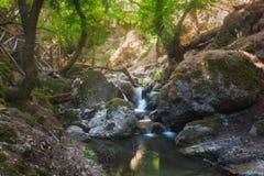 Butterfly Valley en naturreserv Rhodes ö Grekland arkivfoton