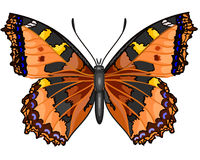 Butterfly Vanessa cardui. Beautiful abstract butterfly insects Butterfly Vanessa cardui vector EPS8 illustration Royalty Free Stock Photo
