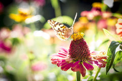 Butterfly Vanessa cardui Stock Images