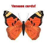 Butterfly vanessa cardui vector illustration stock illustration
