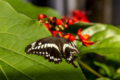 Butterfly Varieties at Botanical Gardens Royalty Free Stock Photo