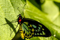 Butterfly Varieties at Botanical Gardens Stock Photography